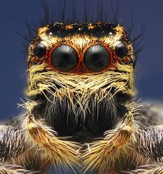 Iranian photographer Omid Golzar shot the spiders, moths, wasps and beetles in extreme close-up - taking 'macro' pictures by simply reversing a normal camera lens to magnify the subject. Scorpion, Macro Fotografie, Pictures Of Insects, Jumping Spider, Beautiful Bugs, Close Up Portraits, Life Pictures, Macro Pictures, Baby Owls