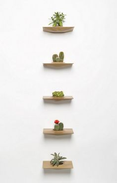 Little Succulents - Pequeñas suculentas (like the shelves) Indoor Garden, Indoor Plants, Air Plants, Diy Hanging Shelves, Plant Shelves, Floating Shelves, Hanging Plant Wall, Display Shelves, Wall Shelves
