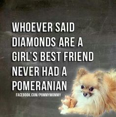 Marvelous Pomeranian Does Your Dog Measure Up and Does It Matter Characteristics. All About Pomeranian Does Your Dog Measure Up and Does It Matter Characteristics. Cute Puppies, Cute Dogs, Dogs And Puppies, Doggies, Dogs 101, Pomeranian Breed, Pomeranians, Pomeranian Facts, Small Pomeranian