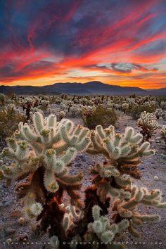 Desert Symphony III by Sean Bagshaw via 500px