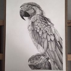 Illustration & Painting / Stunning Photo Realistic Graphite Drawings by Monica Lee portraits photorealism hyperrealism graphite Pencil Drawings Of Animals, Realistic Pencil Drawings, Pencil Drawing Tutorials, Graphite Drawings, Animal Sketches, Bird Drawings, Art Sketches, Drawing Ideas, Drawing Animals