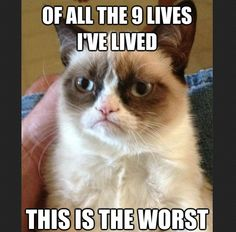 Out of all the nine lives I've lived. This is the worst. #grumpycat #ninelives #negativity