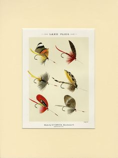 East Urban Home Poster Lake Fishing Flies Version 3 von Mary Orvis Marbury in Beige Life Under The Sea, Vintage Art Prints, Fish Art, Canvas Material, Fly Fishing, Painting Prints, Wrapped Canvas, Wall Art, Mary