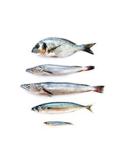 Fish and Other Sea Animals Used for Food