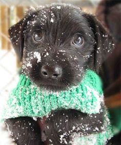 5 Winter Warmers for Dogs