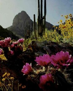 The Sonoran Desert by Christopher L. Helms