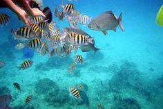 Snorkeling in Chankanaab Park Cozumel, Mexico