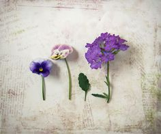 Purple Flower Still Life Photograph woodland by FirstLightPhoto