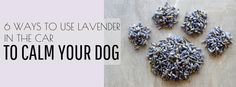 Here are 6 ways to use lavender in the car to calm your dog. Try these easy tips for making car rides with your nervous dog much more enjoyable.