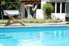Grande 10 * 5m piscina semi privativo coberto