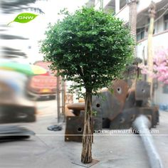 GNW cheap price artificial green Banyan Tree for indoor decoration Artificial Tree Branches, Artificial Cherry Blossom Tree, Artificial Plants And Trees, Ficus Microcarpa, Ficus Tree, Blossom Trees, Oak Tree, Green Trees, Greenery