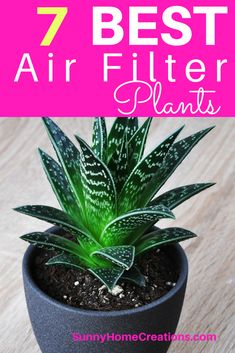 An awesome way to filter the air in your home is by using plants. Here are some of the best plants to get when you want cleaner air in your house.