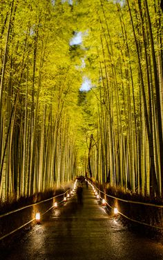 Cold, Crowded, and Cliché — six second exposure to get moving people to fade away — Arashiyama Bamboo Forest Lightup, Kyoto Japan 京都・嵐山竹やぶ花灯路  --  Arashiyama Bamboo Forest (嵐山竹やぶ)  --  Copyright 2012 Jeffrey Friedl, http://regex.info/blog/  --  This photo is licensed to the public under the Creative Commons Attribution-NonCommercial 3.0 Unported License http://creativecommons.org/licenses/by-nc/3.0/ (non-commercial use is freely allowed if proper attribution is given, including a link back…