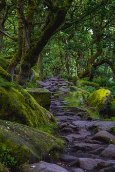 Just another world and universe citizen... — wanderthewood:   Padley Gorge, Peak District,...