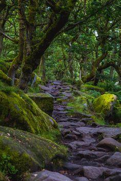 Padley Gorge - Peak District, England