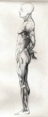 Human Anatomy Female, Human Anatomy Drawing, Body Drawing, Life Drawing, Human Anatomy For Artists, Anatomy Sketches, Body Sketches, Anatomy Reference, Art Reference