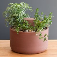 A no-fuss self-watering planter from ceramic artist Joey Roth