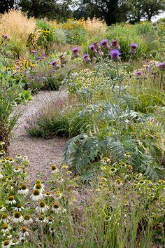gravel path through high-summer prairie plants at the RHS Garden in Wisley, Surrey, England