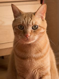 (Video) How to Prevent your Cat from Spraying ------------------------------------------------------------------- Cute Cats And Dogs, Cats And Kittens, Cat Nose, Gato Grande, Orange Tabby Cats, Curious Cat, Ginger Cats, Cat Grooming, Beautiful Cats