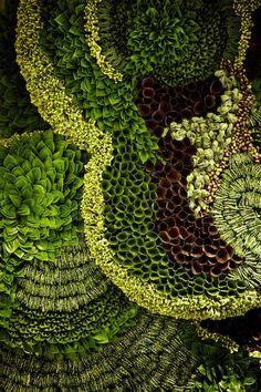 Botanical walls  Japanese artist Makoto Azuma has decorated Shinjuku's Isetan department store with foliage installations to mark its grand reopening