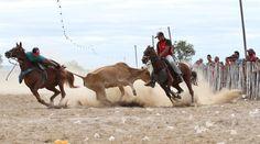 Santa Filomena Atual: Por 6 votos a 5, STF suspende a prática da vaqueja...