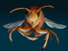 Micro Monsters is shortly to be launched in the UK by Amber Books   A European hornet