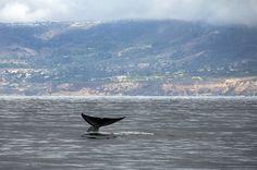 Ocean Predators' West Coast Hot Spots At Risk Despite Sanctuaries, Study Says