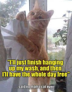 Or dad cat, either http://cheezburger.com/9054787072/laundry-cat-meme