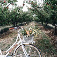 "Bike with Basket… gracewins: "" My Provence Story """