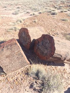 Petrified Wood in the Petrified Forest National Park, Arizona. Petrified Forest National Park, Best Campgrounds, Petrified Wood, Arizona, National Parks, Outdoor Decor, Pictures, Photos, Grimm