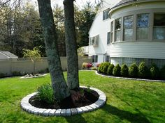Jumbo Cobblestone border around tree installed by Done Right Landscape
