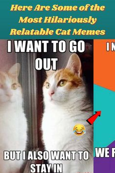 #Some #Most #Hilariously #Relatable #Cat #Memes