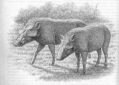 nyanzachoerus.jpg (800×575)