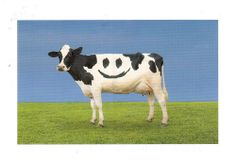 Postcrossing NL-2450865 - Postcard with cow and happy face.  Sent by Postcrosser in the Netherlands.