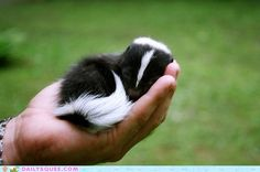 cute animals - Squee Spree: Tiny Handful
