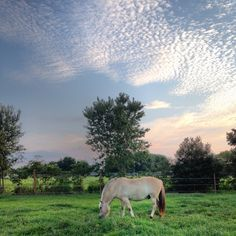 Deere Country Titan Gyllir