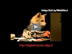 Watch What my doggy can DO and Dogs 101 - Puppy Training | Puppies -  Visit    This video teaches you how to train your dog how to train a puppy and other dog training tips and tricks.  dog training  how to train your dog  how to train a dog  dog training tips  how to train a puppy  training your dog  train your dog  training a dog  obedience training for dogs  how to train dog  train dog  how to train your puppy  how to train dogs  dog obedience training  train a dog  training dog  how to train