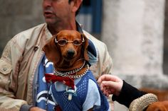 Havana dogs in clothes 1 by amutena, via Flickr  Couldn't resist!!
