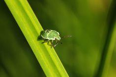 a little green bug http://fc-foto.de/36581172
