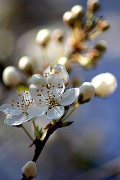 """""""Blüten Zauber"""" von May16 aus dem aktuellen CEWE Fotowettbewerb: https://contest.cewe-fotobuch.de/garten-und-kultur-2016  #cewefotowettbewerb #garten #kultur"""