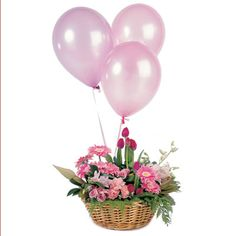 """Basket Arrangement and Three Balloons. """"Celebrate!"""" - A pretty basket arrangement typically including, gerberas, roses and carnations, presented with three latex balloons. Choose your colour scheme to suit the occasion. #flower"""