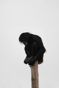 Lonely by GraphicReality, via Flickr