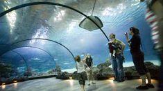 Diergaarde Blijdorp, Rotterdam. Met mooie aquaria...