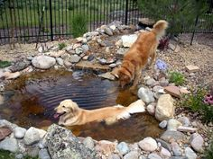 Our cousins, above, Molly and Piper,have a brand new water play pen. They built a small pond with a waterfall in the back yard so that M...