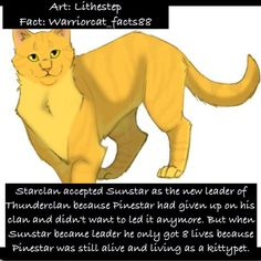 """If you've read """"Bluestar Prophecy"""" you know Warrior Cats Quotes, Warrior Cat Names, Warrior Cats Comics, Warrior Cats Series, Warrior Cats Books, Warrior Cat Drawings, Warrior Cats Art, Cat Comics, Warriors Memes"""