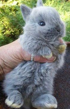 bunny cheek chubby face hi love name say