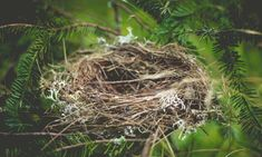 Empty Nester Marriage: How to Understand Your Man Syndrome Du Nid Vide, Empty Nest Syndrome, Flying The Nest, Dear Parents, How To Attract Birds, All Birds, Your Man, Animal House, Two By Two
