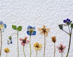 Use filters as blotting paper for pressed flowers. Put the flowers between 2 filters and put the filters in a phone book.
