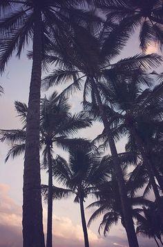 Palm Tree Sunset- Photographic Print