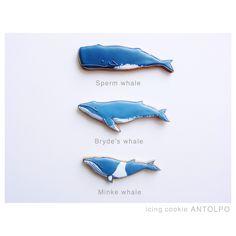 Whales! Sperm, Byrde's, Minke. BLOG クジラアイシングクッキー